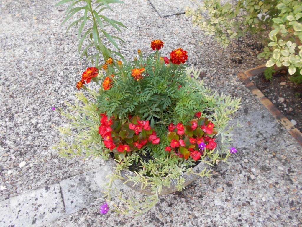 autre composition florale